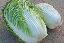 как сажать пекинскую капусту правильно