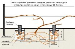 Схема устройства дренажных колодцев для орошения винограда