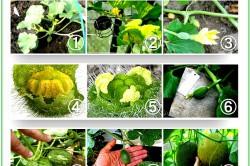 Процесс выращивания дынь