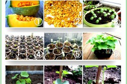 Выращивание рассады для дыни