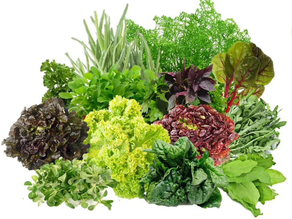Урожай зелени