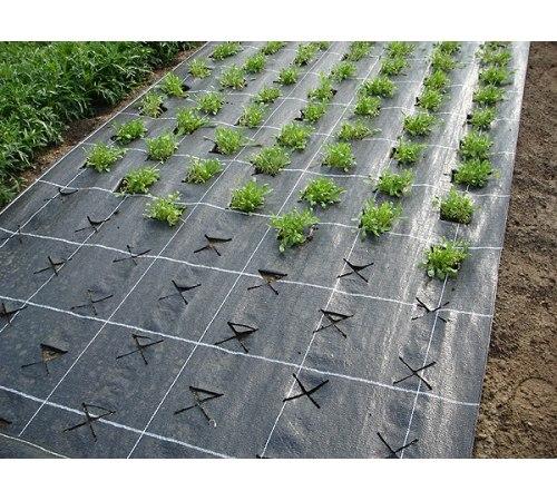 Выращивание клубники на агроволокне