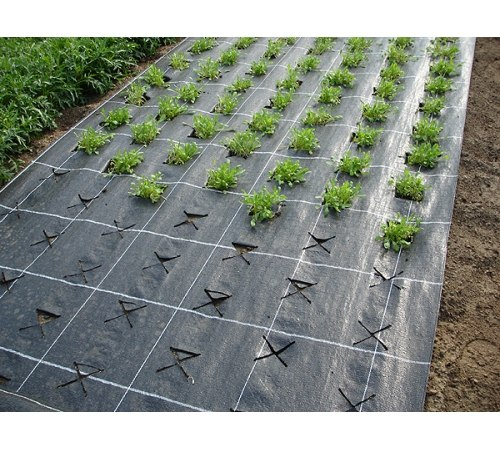 Выращивание клубники на