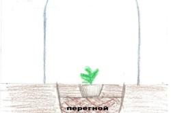 Схема посадки арбуза и дыни в парник