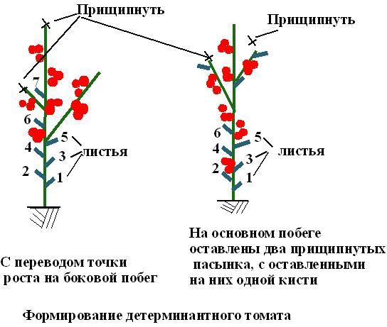 Схема пасынкования