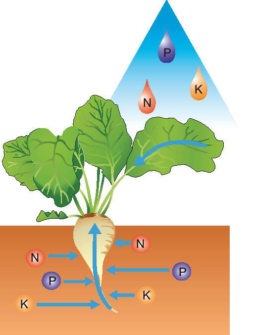 Схема потребления питательных
