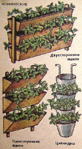 для выращивания клубники