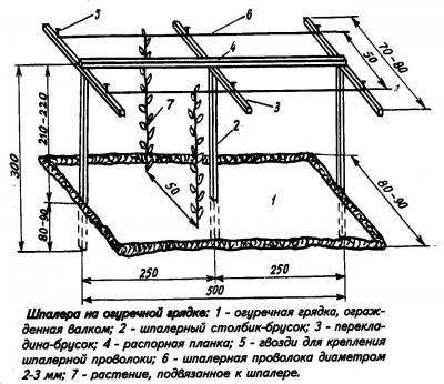 Схема выращивания огурцов на