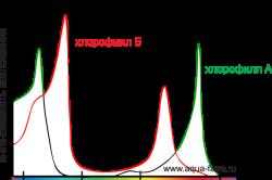 Спектры, воспринимаемые растениями