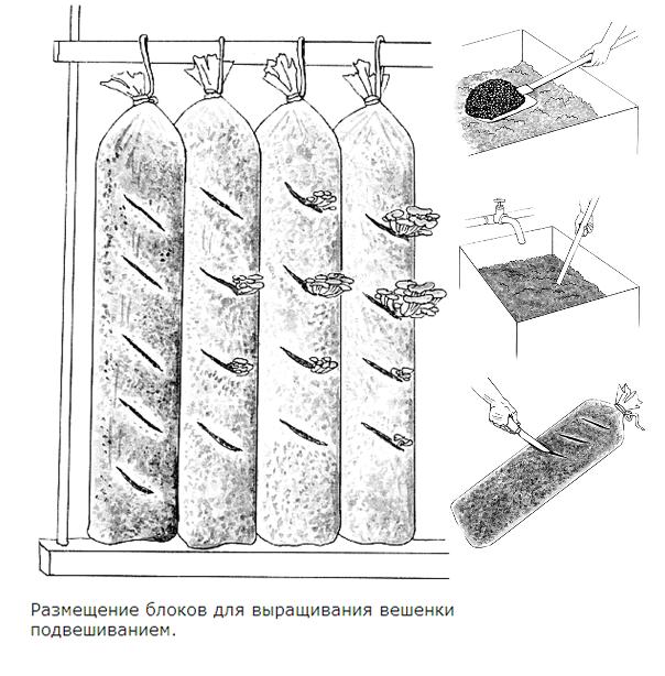 Схема выращивания грибов в