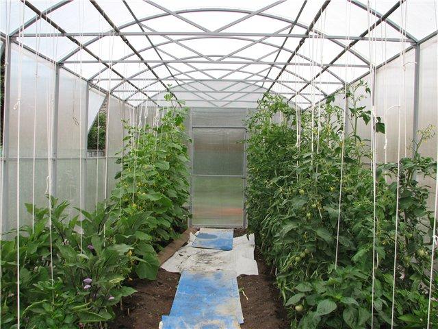 Совместное выращивание томатов