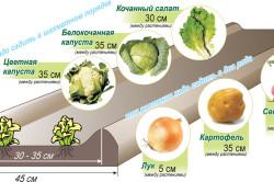 Схема выращивания овощей в ящиках-грядах по Митлайдеру
