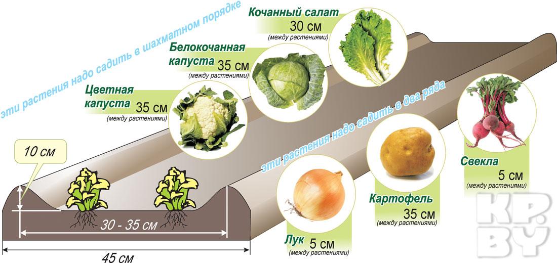 Схема выращивания овощей в