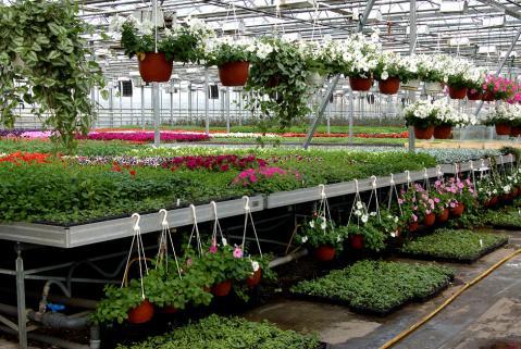 Пример выращивания цветов в теплице