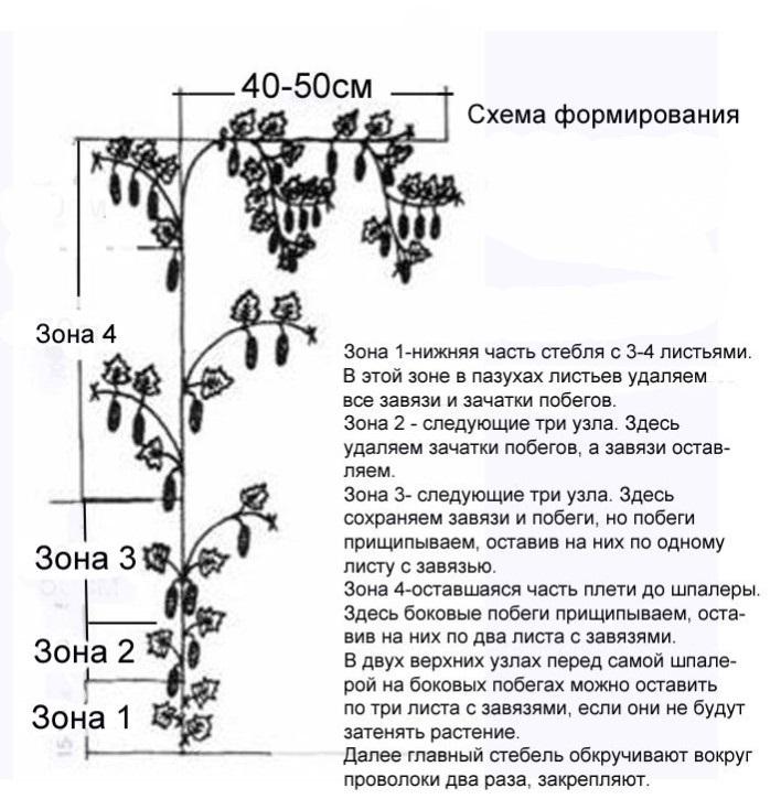 Схема формирования куста.