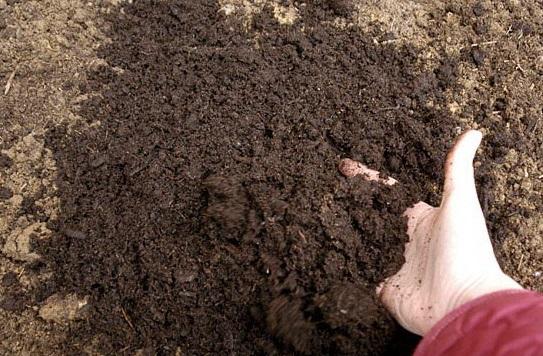 Обеззараживание почвы
