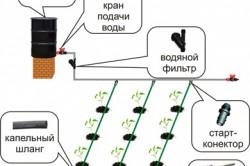 Схема капельного полива подведенного к лункам с растениями