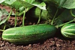 урожайные грядки