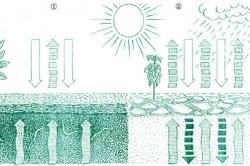 Преимущества мульчирования почвы