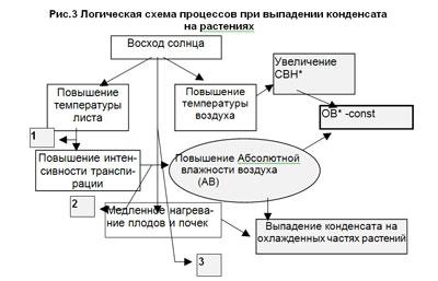 Процесс конденсата у растений