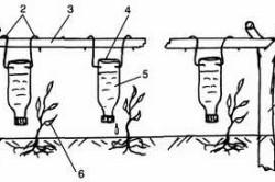 Схема устройства капельного поливаиз пластиковых бутылок