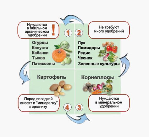 Схема соседства овощей по виду