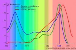 Влияние излучения ик-лучей на растения