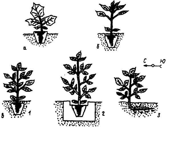 Схема посадки рассады в почву