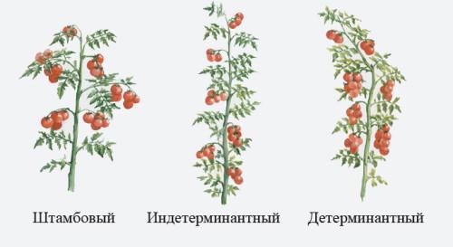 Виды формирования томатов: